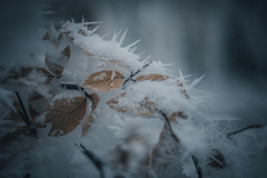 Zima za rohom