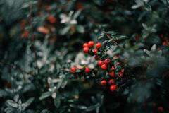 farby v zime