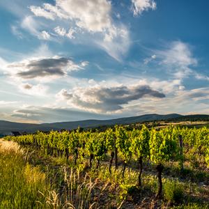 vína kraj