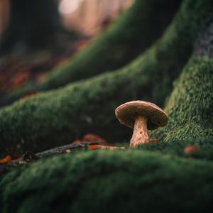do zelena