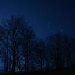 obloha a stromi