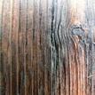 krasa dreva3