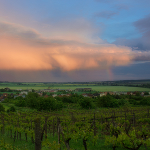 Po búrke z vinohradu...
