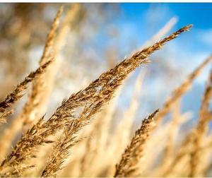 zimná tráva