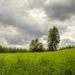 Opustené stromy v strede lúky