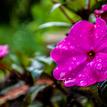 Chvíľka po daždi