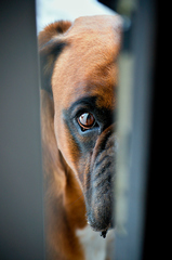 Pusti ma dnu, prosím