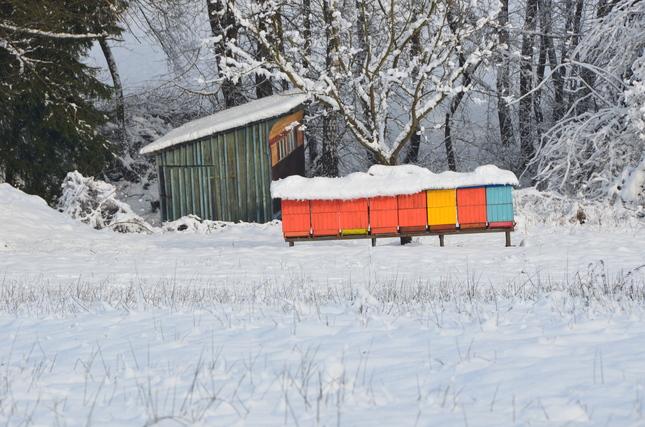 Beehive in winter