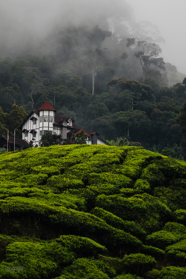Malajzia - Cameron Highlands