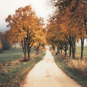 Jesenná alej