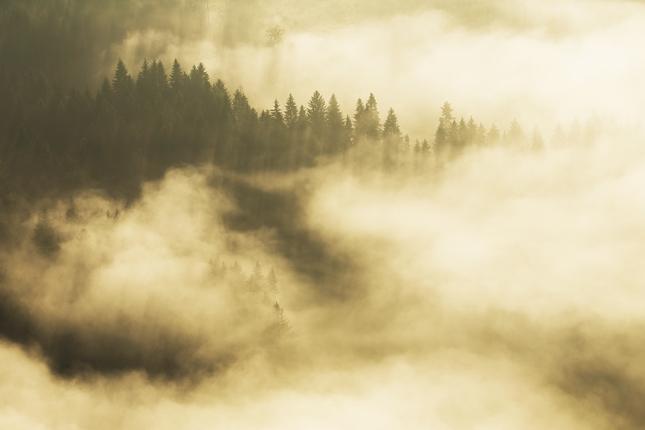 ranny les