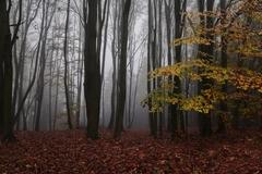 ranný les