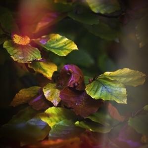 listové tajomstvá