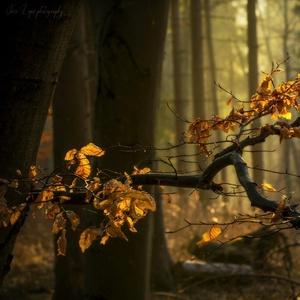mágia ranného lesa