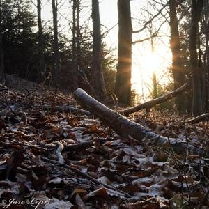 Januárový les ...