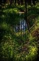 tajomstvá lesa