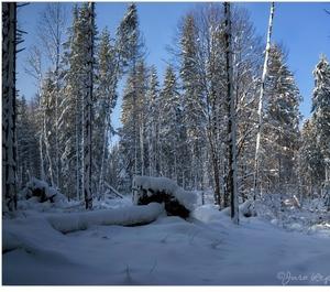 čaro zimy