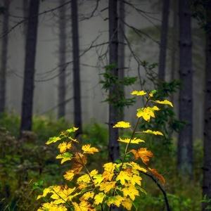 svetlo v rannej hmle