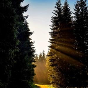 orosené,slnečné ráno