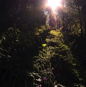 lesná džungľa