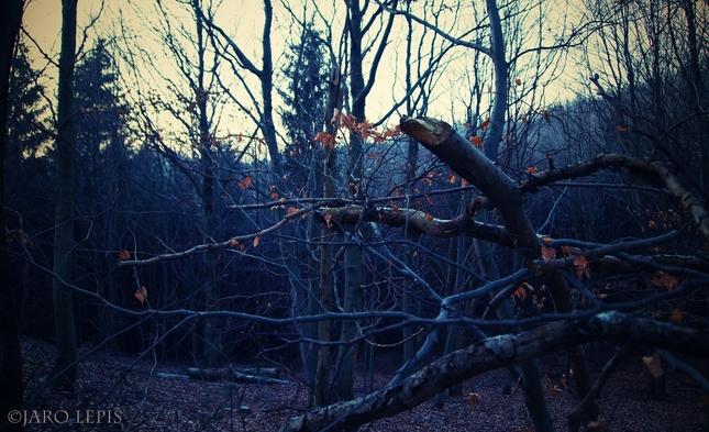Modrý les