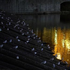 večer na Vltave
