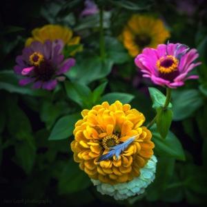 záhradná