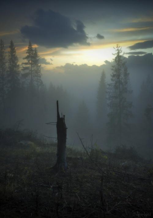 ticho v rannej hmle