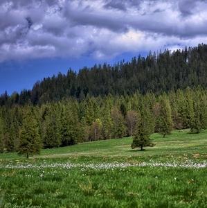 Tichá dolina - Oravice