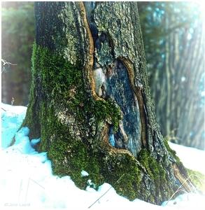 winter supernatural
