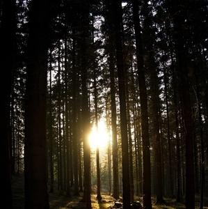 Tajomný les ...