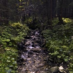 lesný potôčik