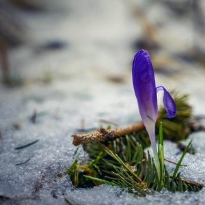 prísľub jari
