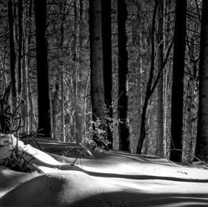 tajomstvá zimného lesa