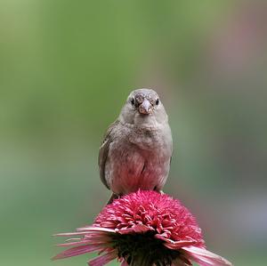 vták a kvet III