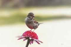 vták a kvet II