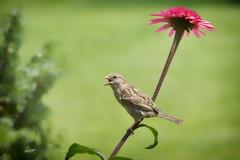 vták a kvet