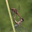 zo života hmyzu