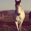 Na konskom chrbte je raj srdca.