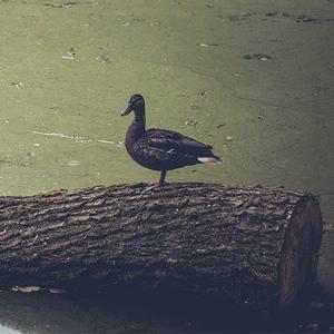 Kačka modelka :)