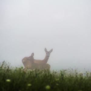 Ráno v hmle
