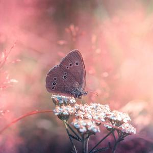 pink dream..