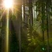Ráno v lese..