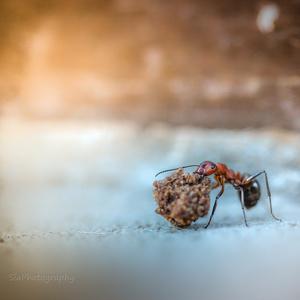 život mravca