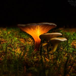 -V čarovnom lese-