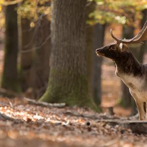 -Šľachta lesa-