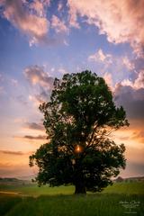 - Srdce stromu -