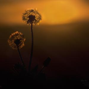 pri západe slnka