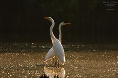 Elegancia na rybníku