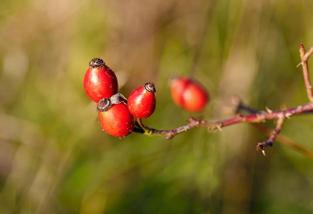 jesenne plody